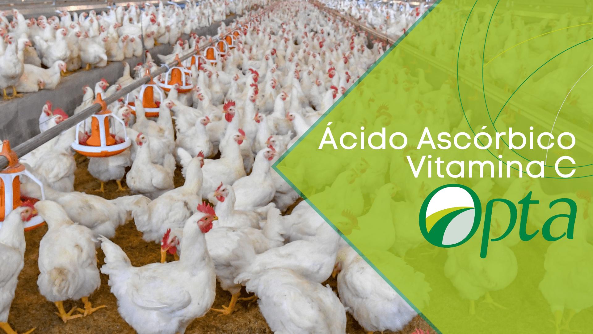 Ascorbic acid (Vitamin C) – Broiler nutrition